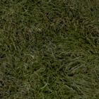 Grazelands Grass